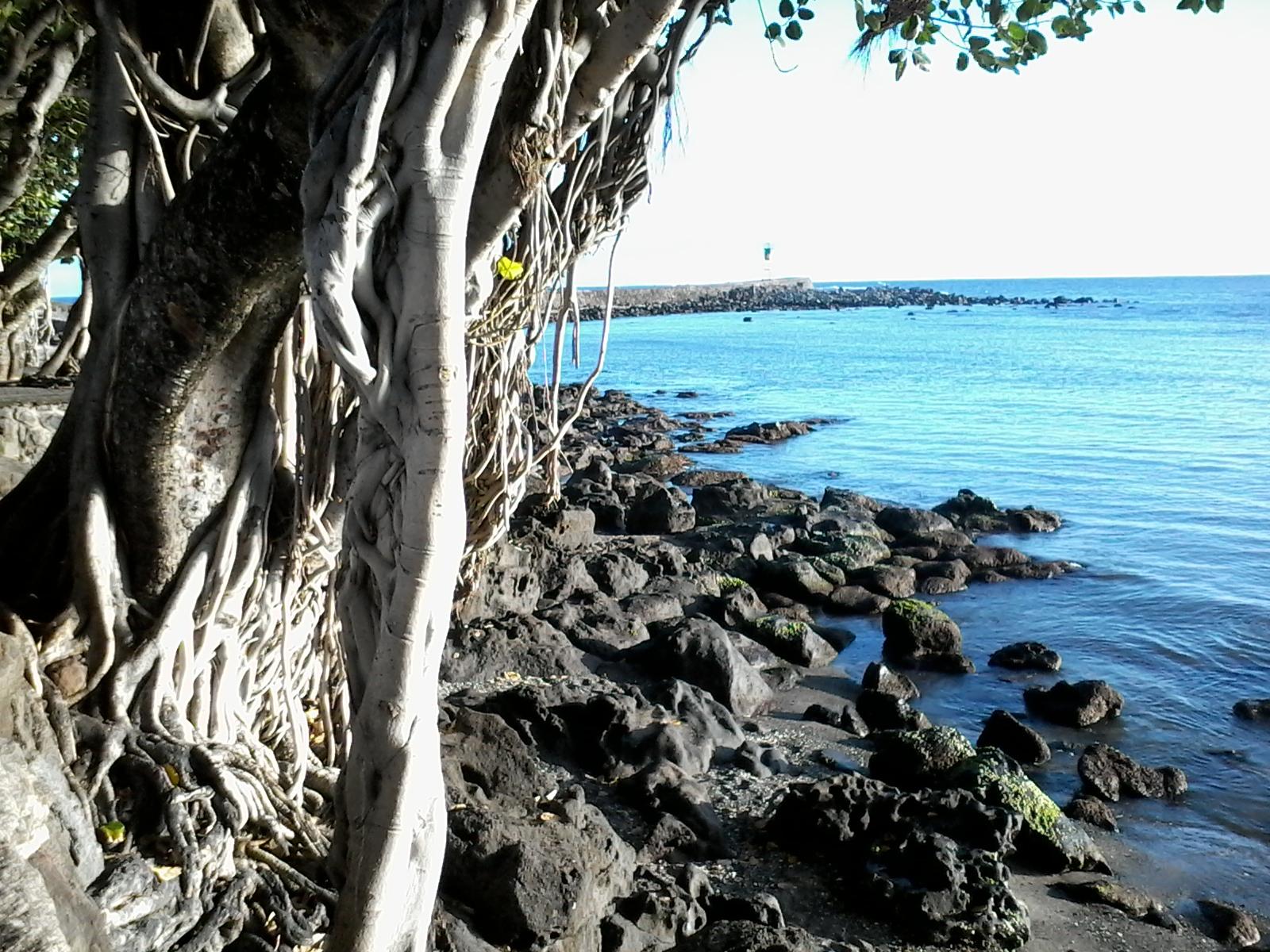 Un arbre des roches et de l eau