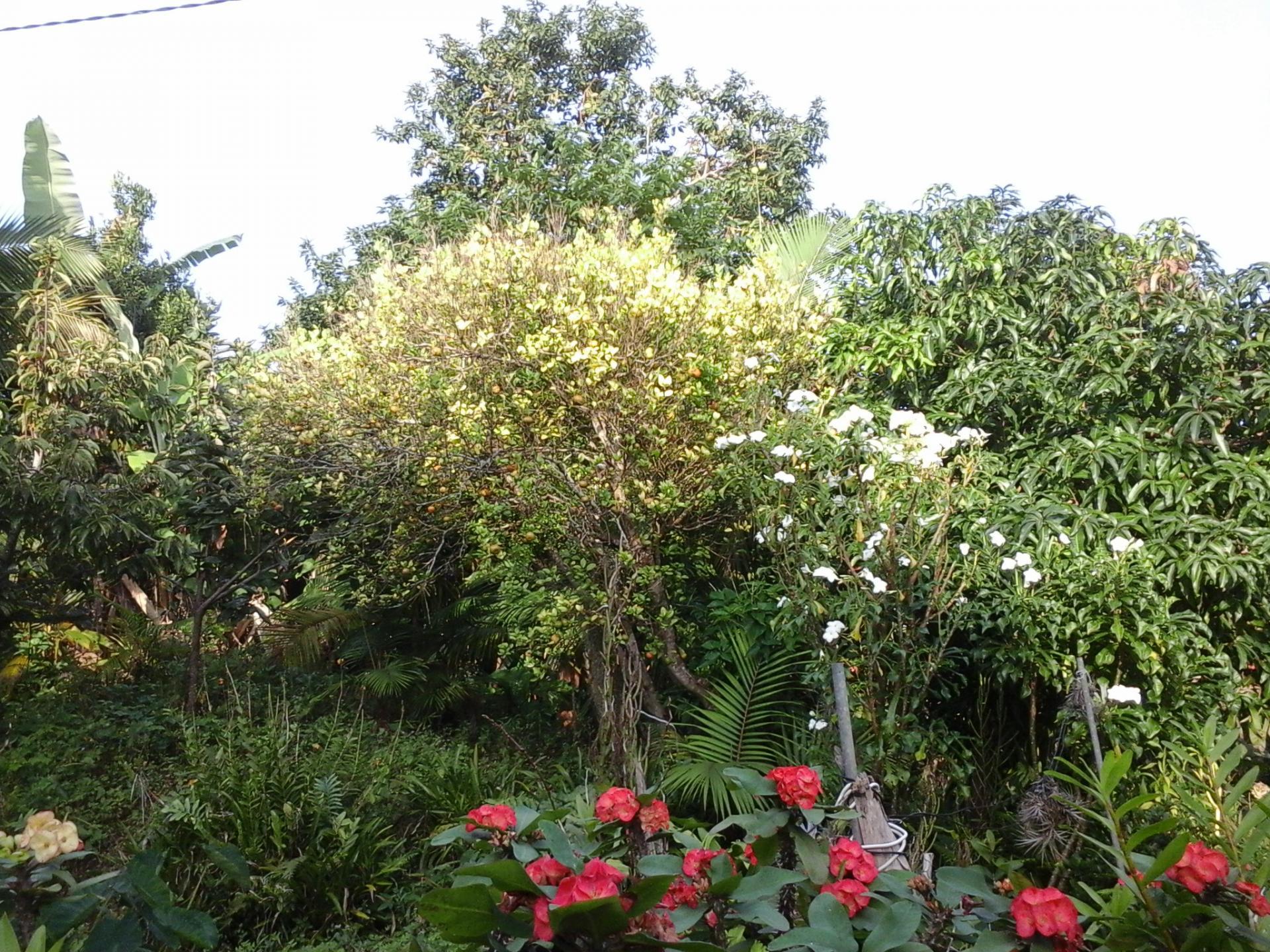 Mamy garden 5